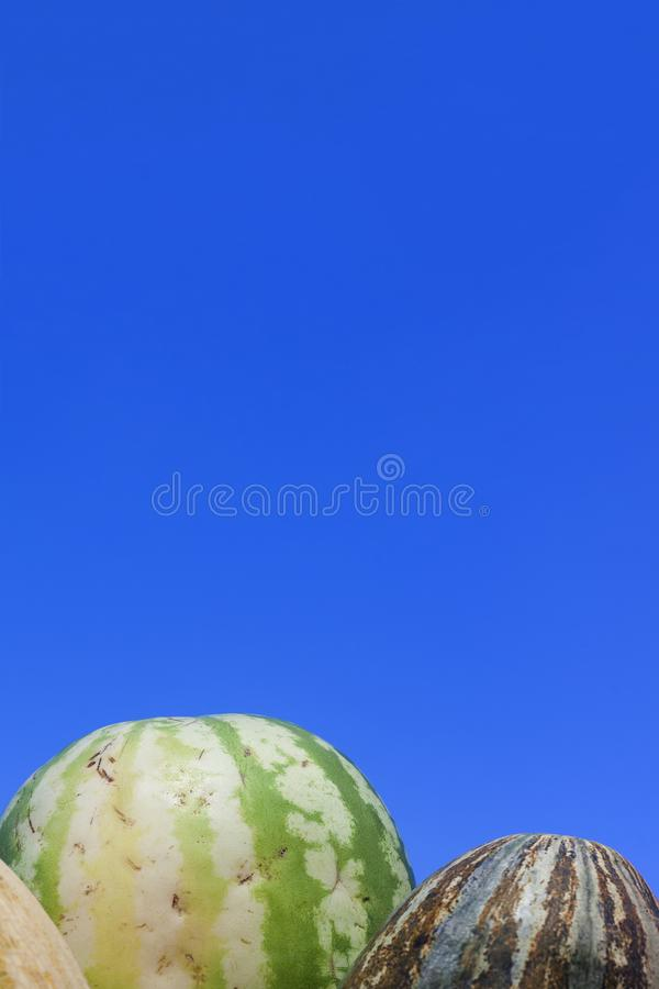 Group of fresh ripe yellow sweet melons and watermelons. Cantaloupe melons for sale in organic farm for sale.  royalty free stock photo
