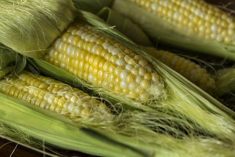 Group of fresh sweet corn uncooked stock image