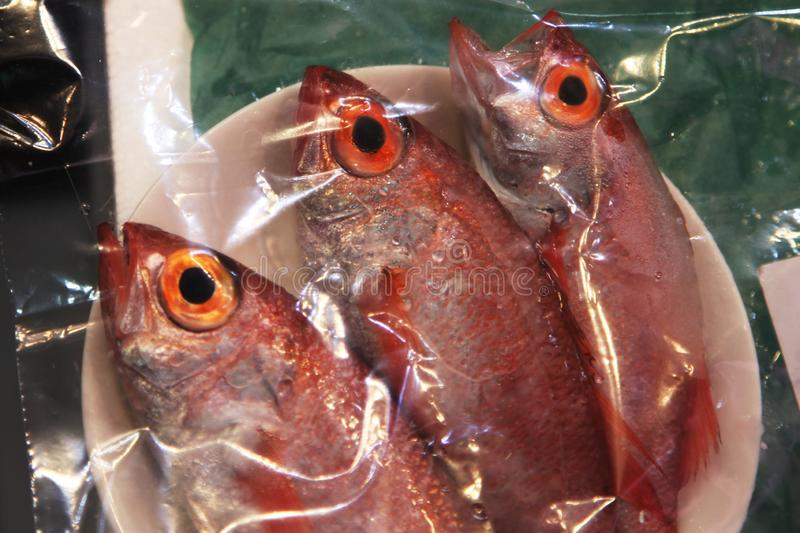 Fresh fish in red for sale. Group of freshly caught red fish for sale at the market stock photos