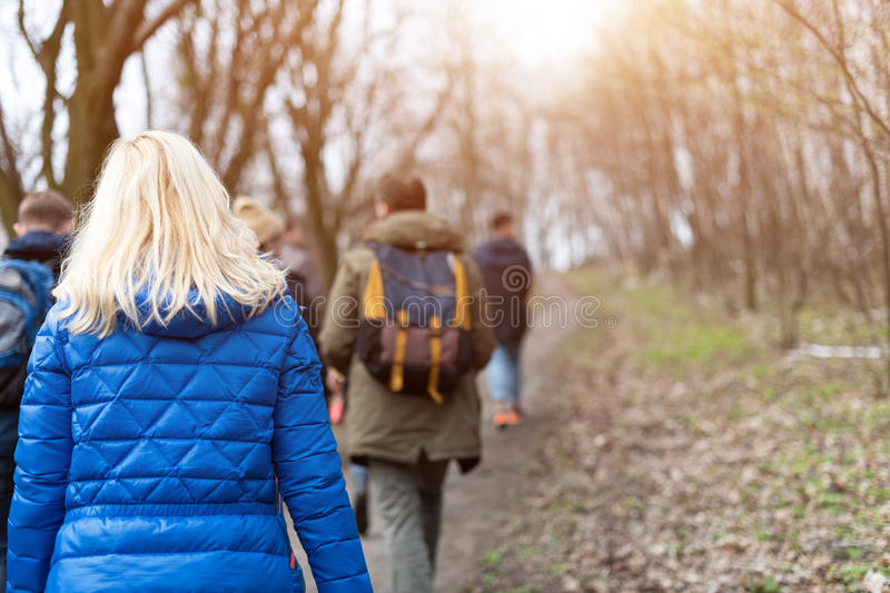 Group of friends walking with backpacks in spring forest from back. Backpackers hiking in the woods. Adventure, travel stock photography