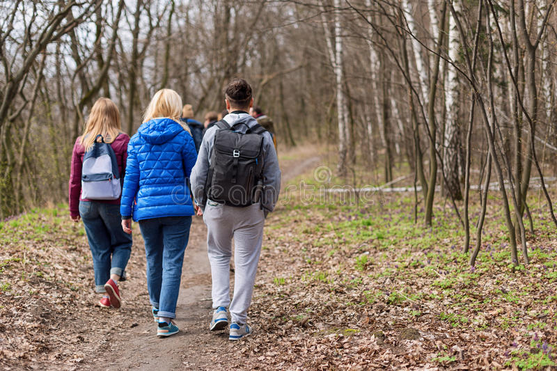 Group of friends walking with backpacks in spring forest from back. Backpackers hiking in the woods. Adventure, travel royalty free stock photo