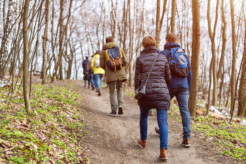 Group of friends walking with backpacks in spring forest from back. Backpackers hiking in the woods. Adventure, travel royalty free stock photos