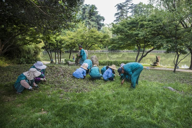 Garden workers clean the weeds in Xuanwu Lake Park royalty free stock photos