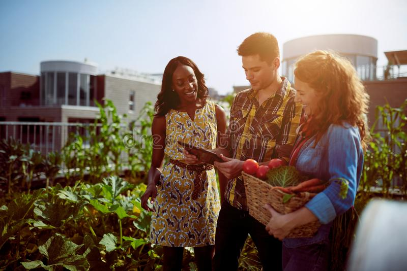 Friendly team harvesting fresh vegetables from the rooftop green stock photography
