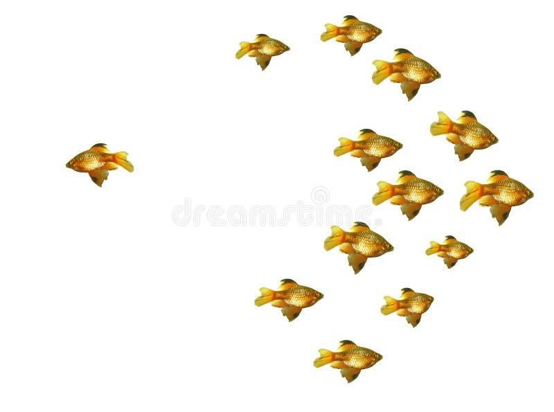 Group of goldfishes royalty free stock image