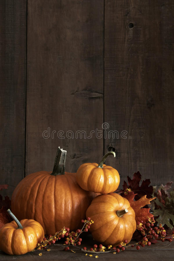 Group Of Gourds And Pumpkin Against A Wood Background Royalty Free Stock Photos