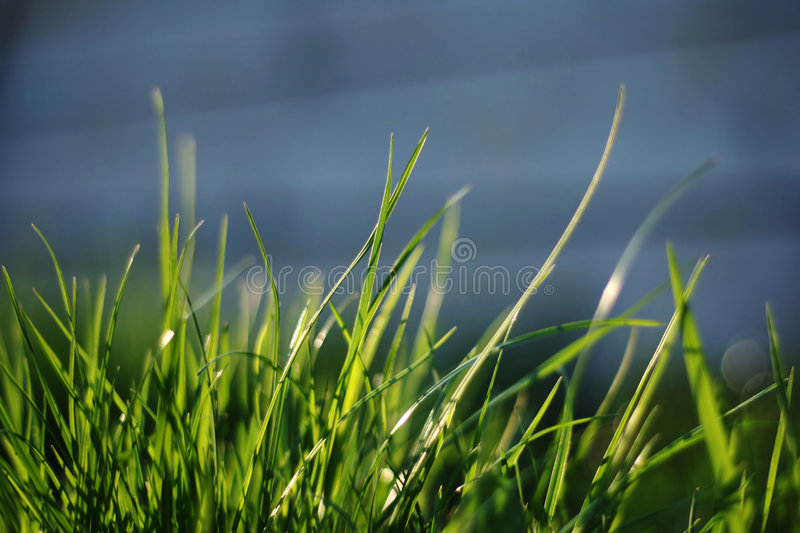 Download A group of grass stock photo. Image of yard, pasture, healthy - 3232768