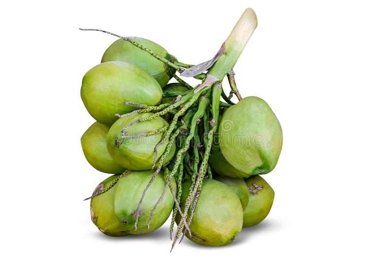Group of green coconuts, coconut cluster isolated on white background stock image
