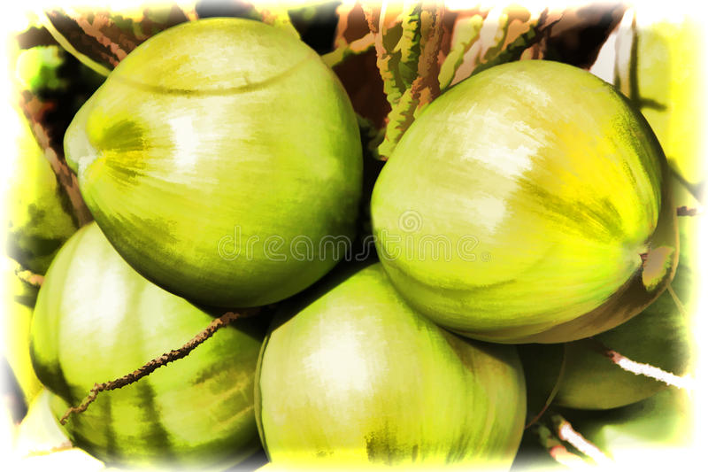Group of green coconuts on palm tree stock illustration