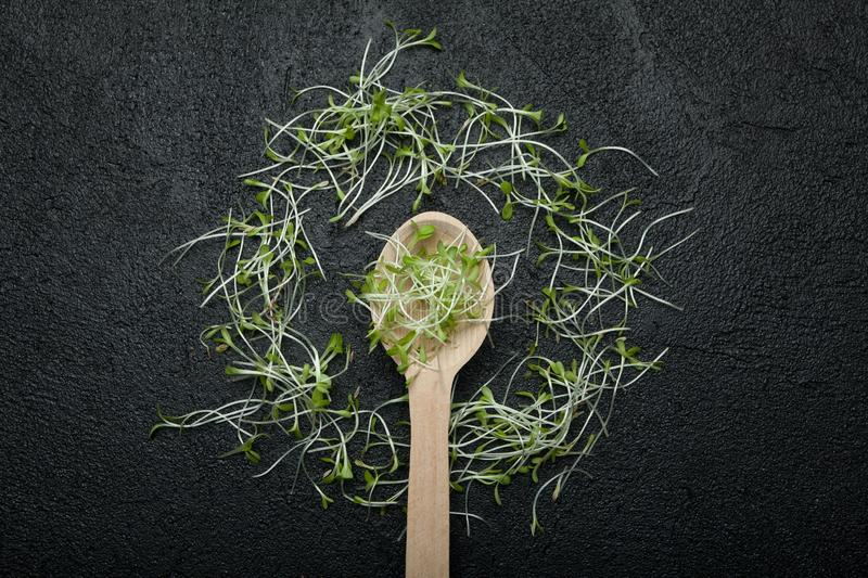 Group of green sprouts, micro greens, baby vegetables on a black background in the shape of a circle around a wooden spoon royalty free stock photo