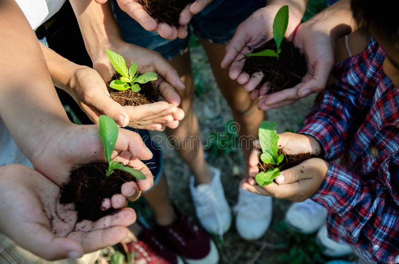 Group of Hand Hold a Little Plant stock photography