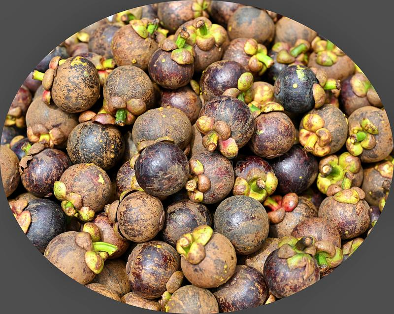 Group of Healthy Fresh Mangosteen Fruit Backgound. Queen of Fruits in Thailand stock photos