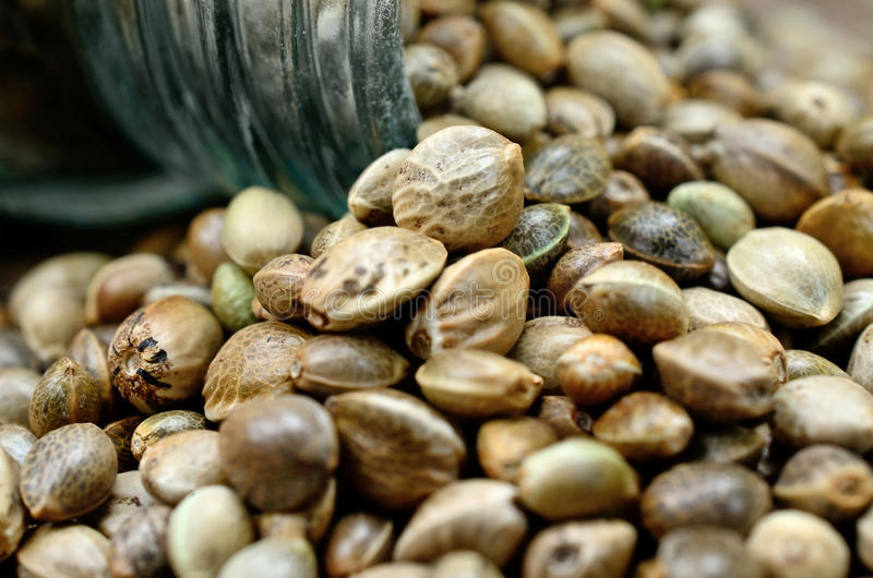 Group of hemp seed stock photo