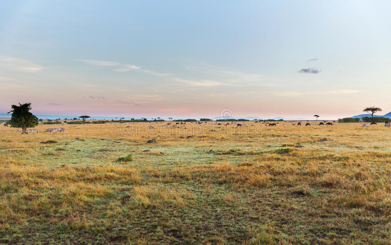 Group of herbivore animals in savannah at africa stock photography