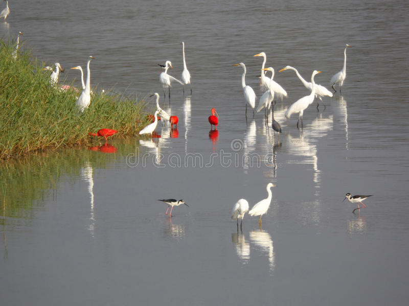 Group of herons royalty free stock photography