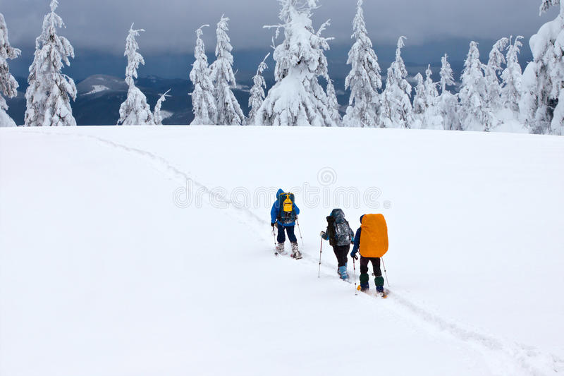 Download Group of hikers stock photo. Image of freshness, health - 23642496
