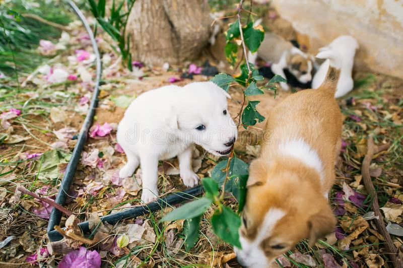 Group of homeless little puppies playing on ground royalty free stock photography