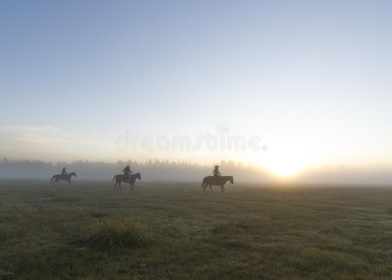 Group of horsemen in a grassy field with a foggy background during sunset. A group of horsemen in a grassy field with a foggy background during sunset royalty free stock photos