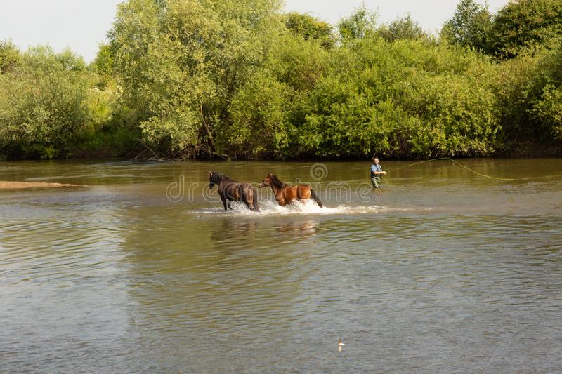 A group of horses running in the water across the river royalty free stock images
