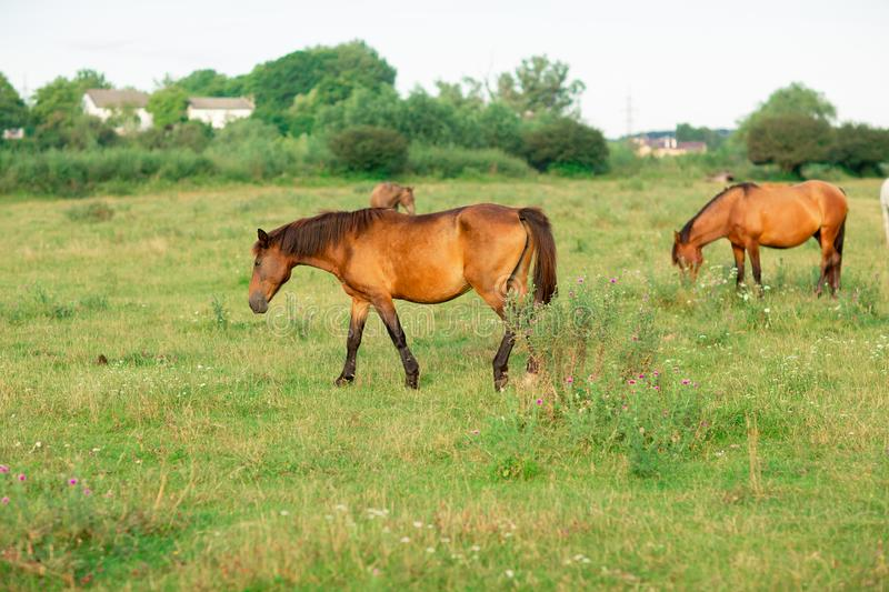 Group of horses in a summer pasture, in the countryside stock photos