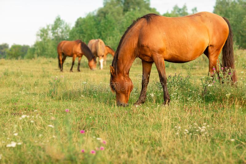 Group of horses in a summer pasture, in the countryside royalty free stock photo