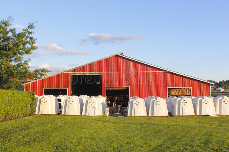 Download Group Of Hutches For Calves Stock Photo - Image: 25439936