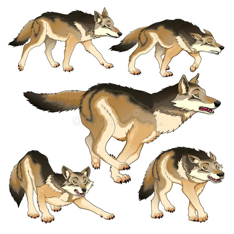 Group of isolated wolves. Vector illustration vector illustration