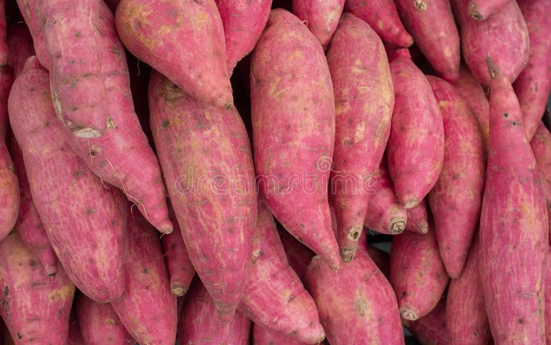 \'Group of Japanese sweet potatoes, Texture and background I royalty free stock photo