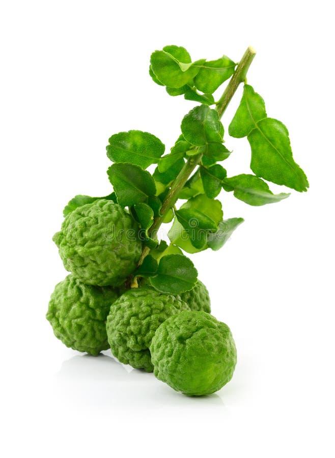 Group of kaffir Lime or Bergamot fruit on white background. stock images