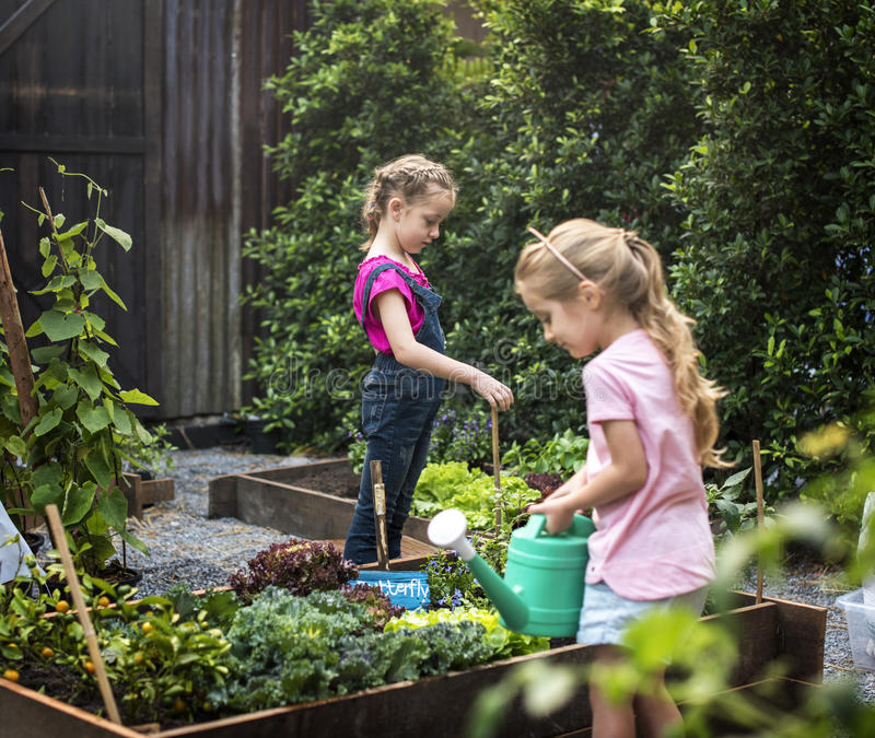 Group of kindergarten kids learning gardening outdoors stock images