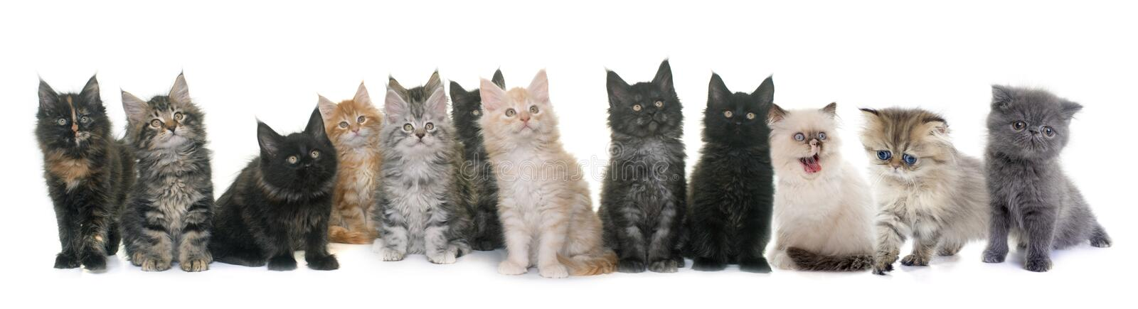 Group of kitten royalty free stock photography