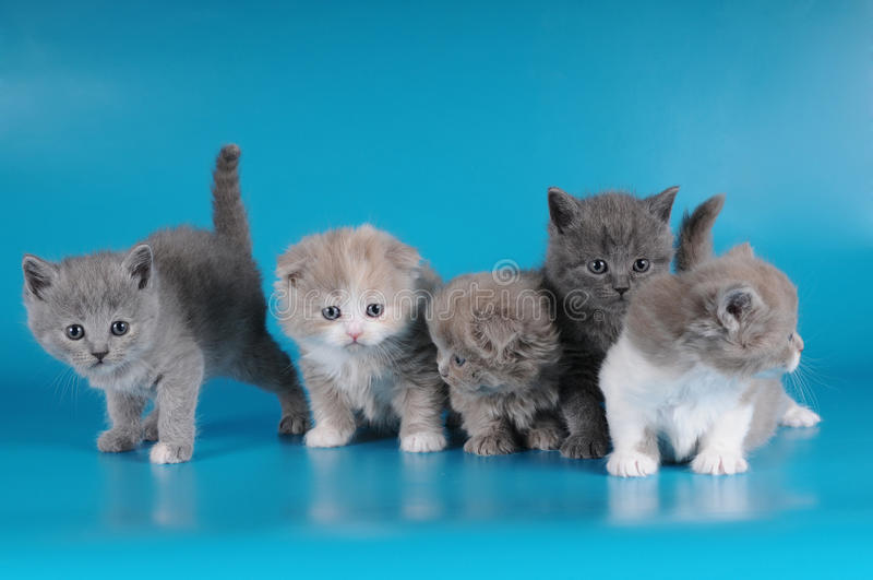Group of kittens royalty free stock photography