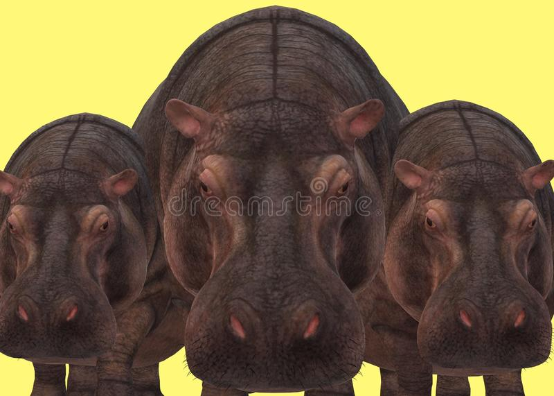 A group of large brown skinned hippopotamus bunched up. A computer generated illustration image of a group of large brown skinned hippopotamus bunched up against stock photos