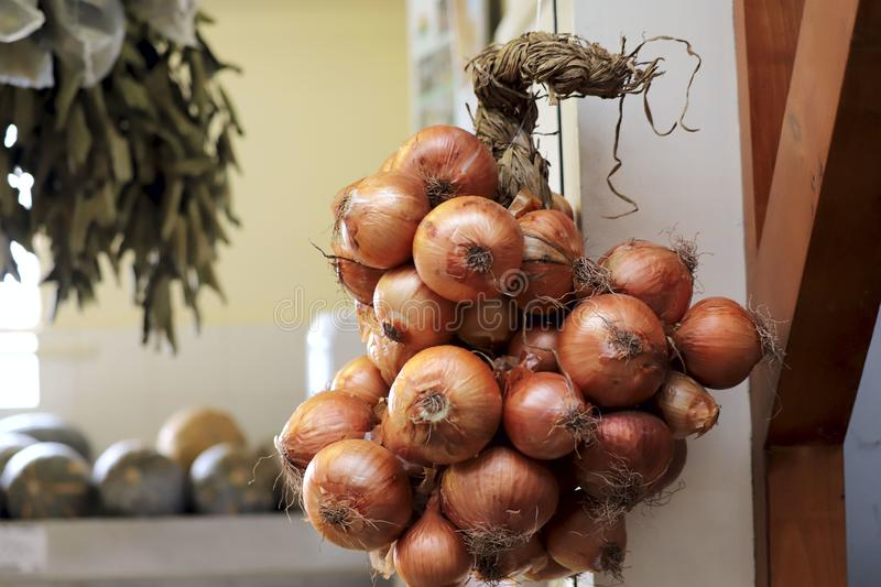A group of large onion heads with brown husks hangs on a shop window in a store. stock images