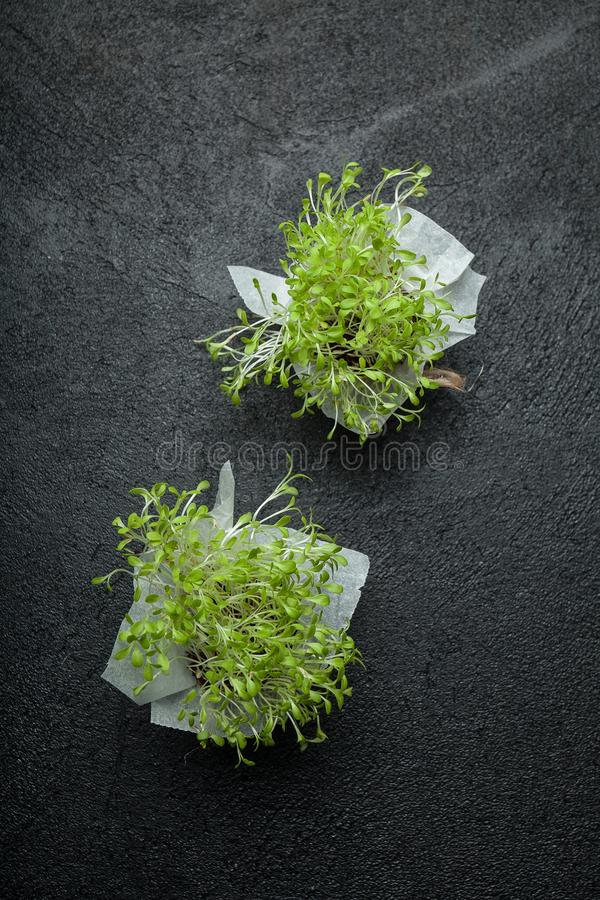 Group of lettuce sprouts, young vegetables on a black background, vertical stock photo