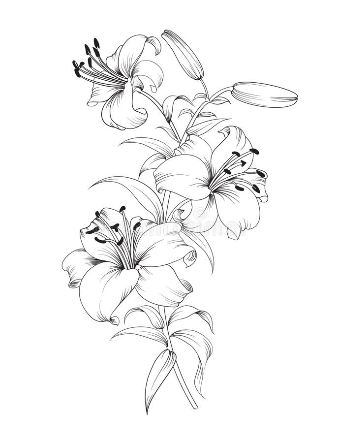 Group of lily flowers royalty free illustration