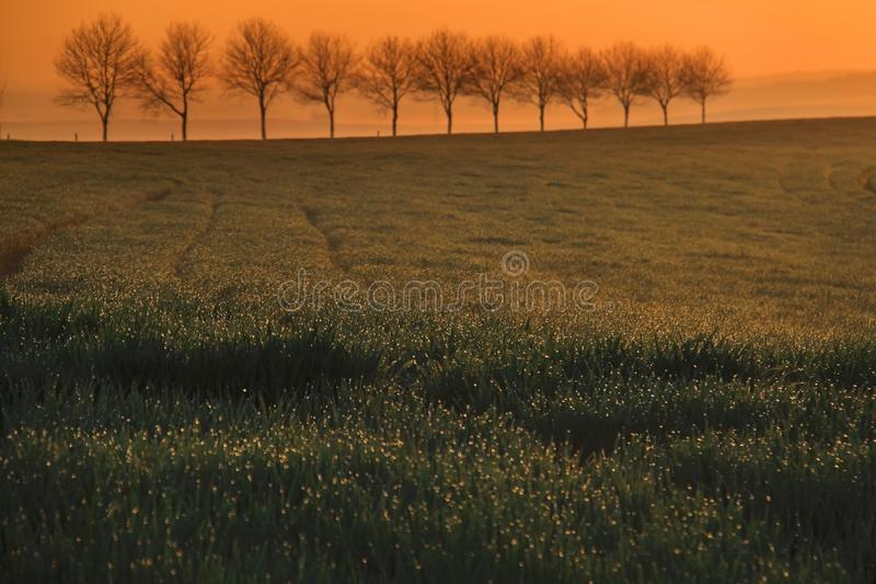 Dew, Grass, and Trees royalty free stock photos