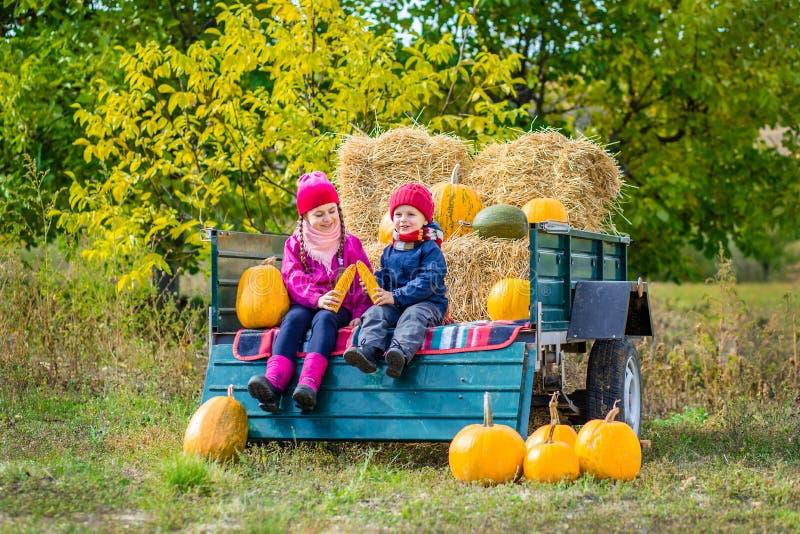 Group of little children enjoying harvest festival celebration at pumpkin patch. royalty free stock photography