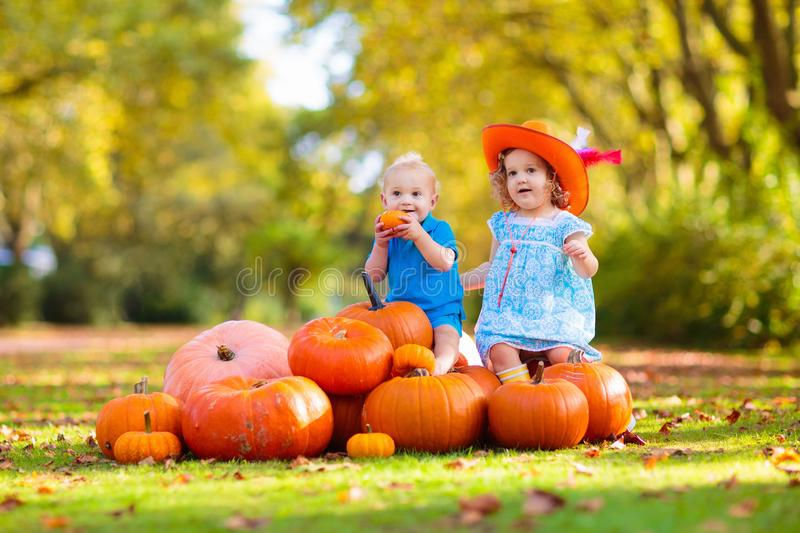 Kids having fun at pumpkin patch. Group of little children enjoying harvest festival celebration at pumpkin patch. Kids picking and carving pumpkins at country stock image