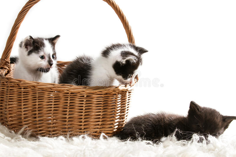 Group of little kittens sitting in a basket stock photos