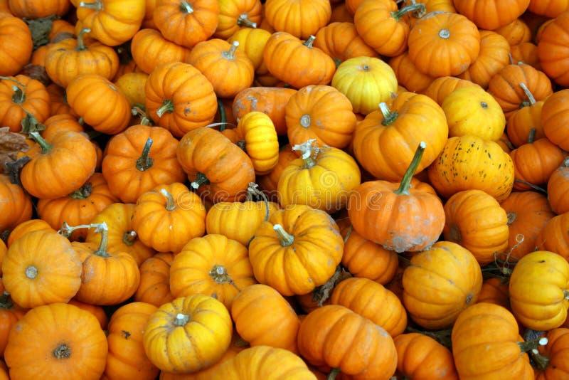 Group of little orange pumpkins royalty free stock image