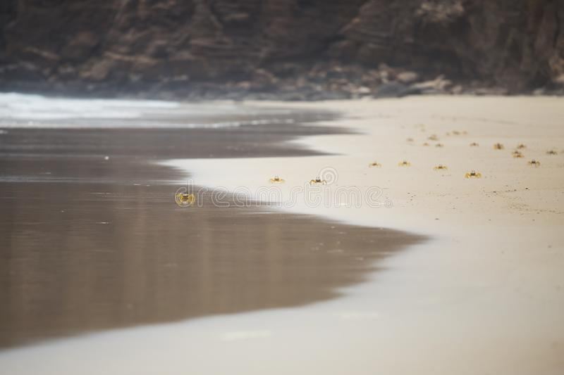 Crabs on the sandy beach. Group of little yellow crabs on the sandy beach stock image