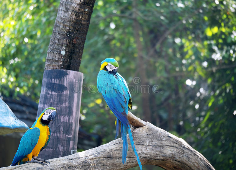 Group of macaws relaxing. stock photography