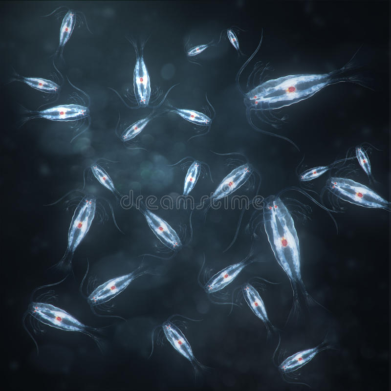 Download Group Of Marine Planktonic Copepod Stock Illustration - Image: 21340809