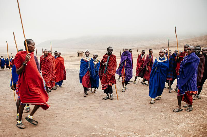 Group Masai or Maasai tribe peoples in red and blue cloth dancing. Ethnic group of Ngorongoro Consevation, Serengeti in Tanzania royalty free stock images