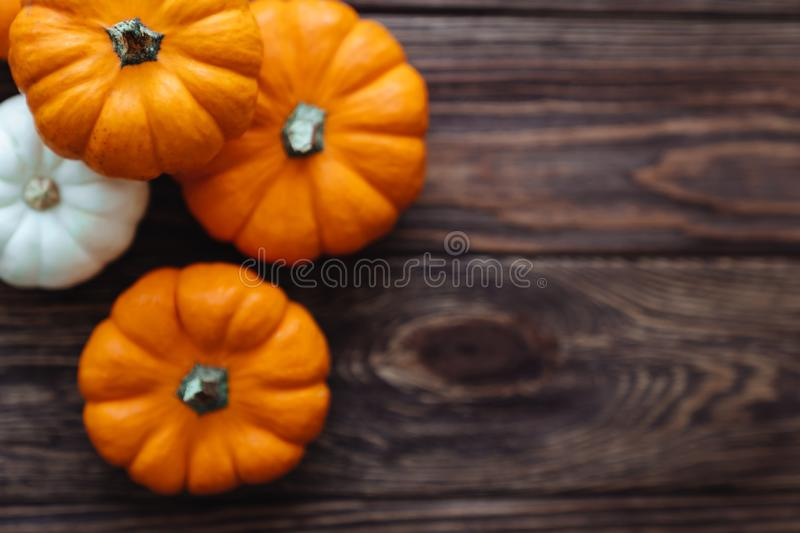A group of miniature pumpkin. On a wooden slat background stock photography