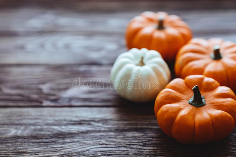 A group of miniature pumpkin. On a wooden slat background stock images