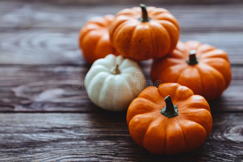 A group of miniature pumpkin. On a wooden slat background royalty free stock photography