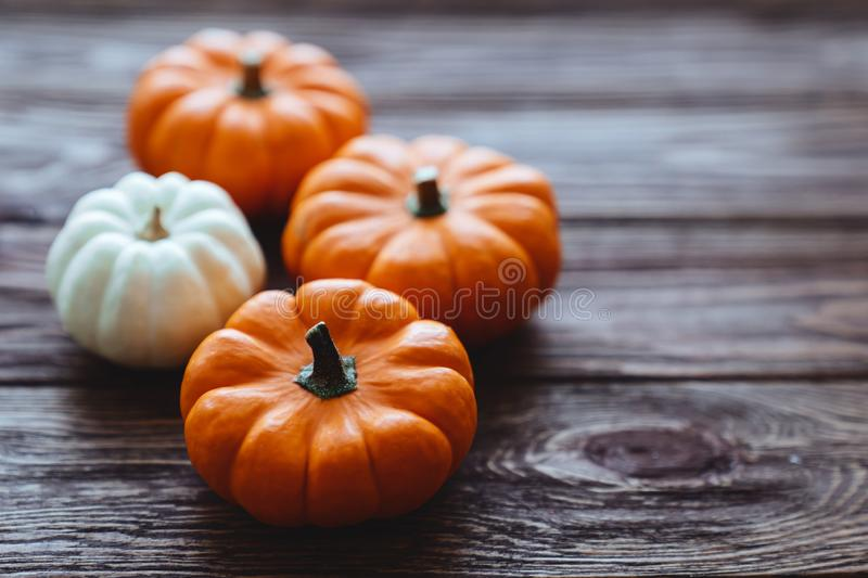 A group of miniature pumpkin. On a wooden slat background royalty free stock image