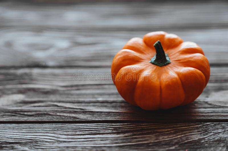 A group of miniature pumpkin. On a wooden slat background royalty free stock photo